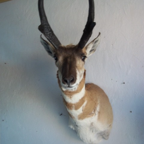 Heads & Tails Taxidermy-12