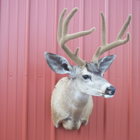 Heads & Tails Taxidermy-13