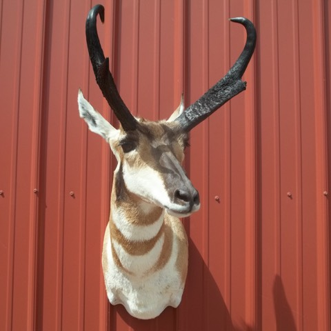 Heads & Tails Taxidermy-15-15
