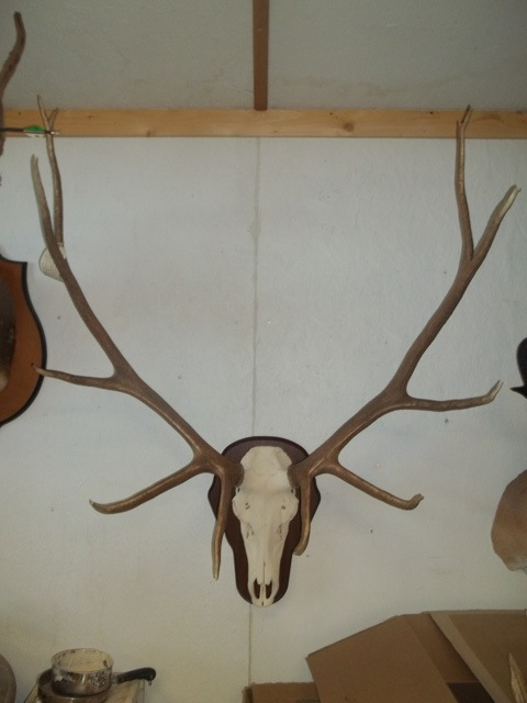 Heads & Tails Taxidermy-3