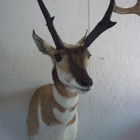 Heads & Tails Taxidermy-5-3